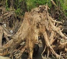 树根粉碎机多少钱一台